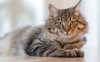 Benefits Of Mobile Cat Grooming