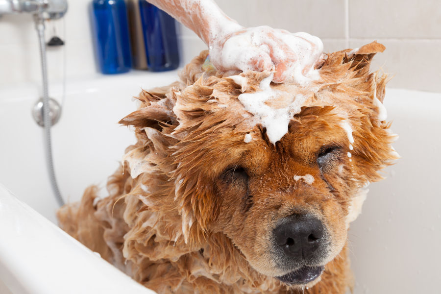 Common Mistakes To Avoid When Grooming Your Dog