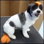 Lucky Dawg Pet Salon & Mobile Pet Grooming Torrance